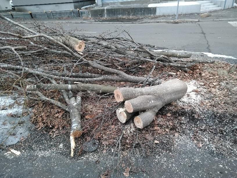 昭和店舗 木の伐採4