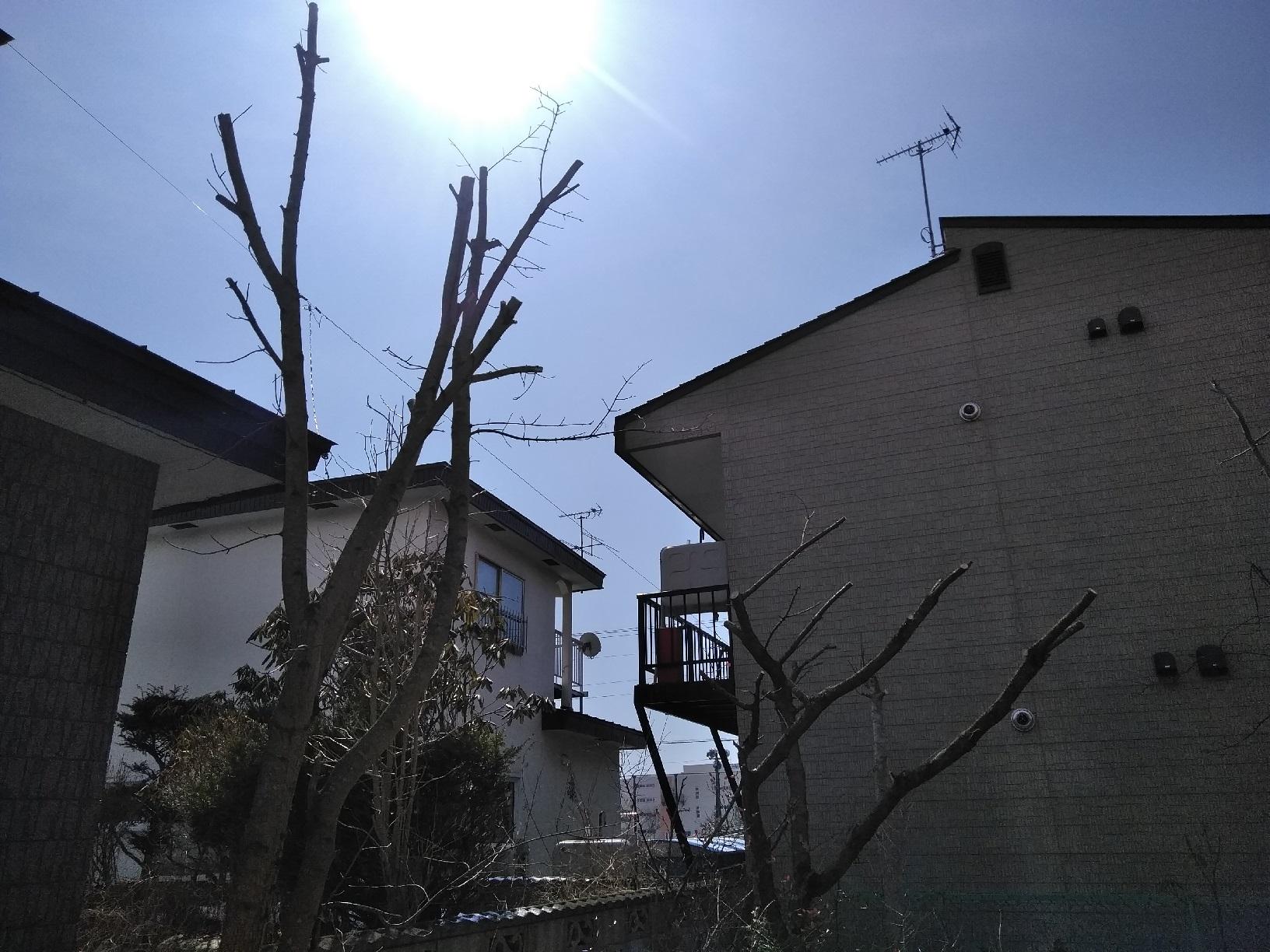 昭和M様貸家 木の伐採5