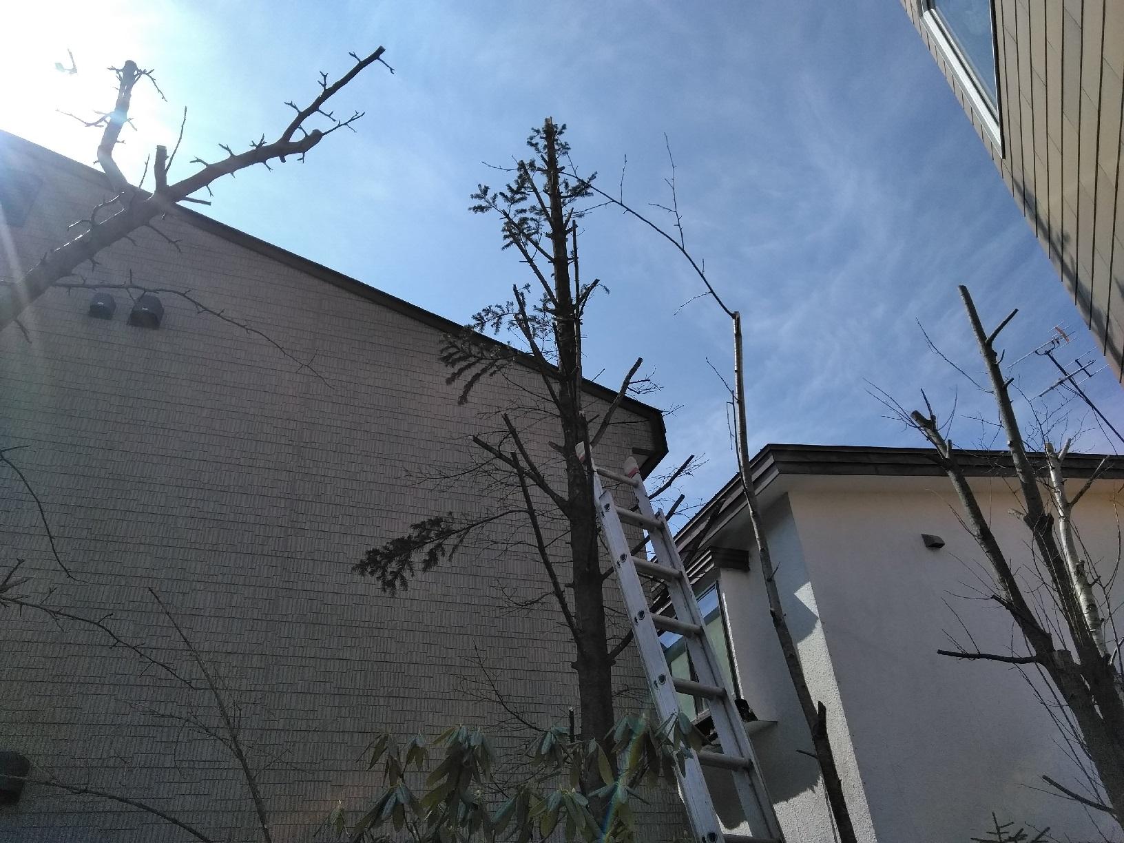 昭和M様貸家 木の伐採7